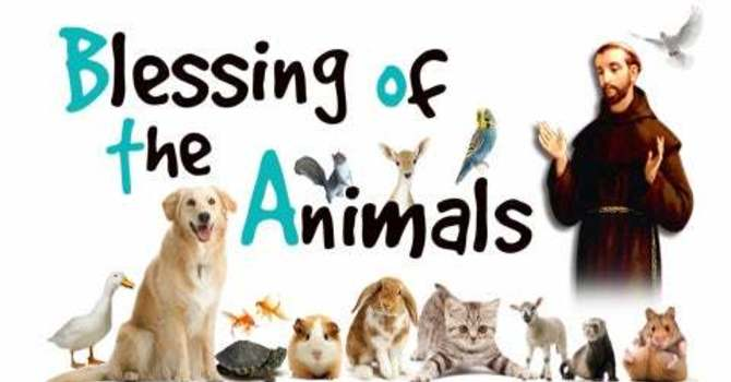 Virtual Animal Blessing: Home Church Service, Sunday October 11,2020 image