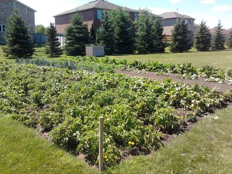 Garden For The Community
