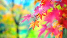 Autumn scene wallpapers 55