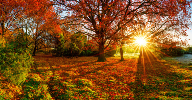 The Blessings of Autum image