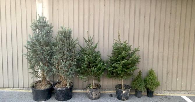 Tree Fundraiser image