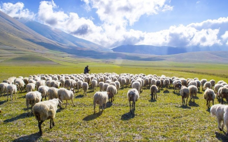 """Exploring the 'I Am' Sayings of Jesus: I Am the Good Shepherd (part 4)"
