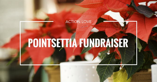 Action Love Poinsettia Fundraiser image