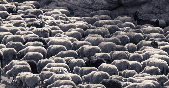 8 Qualities of Shepherd-Leaders image