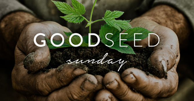 Good Seed Sunday | Invitation to Respond image