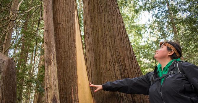 Talking Trees Walking Tour