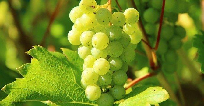Good fruit as the evidence of spiritual growth image
