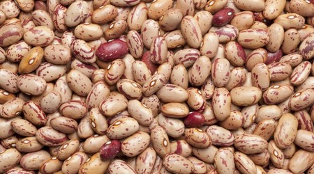 Beans from Grassy Lake, AB