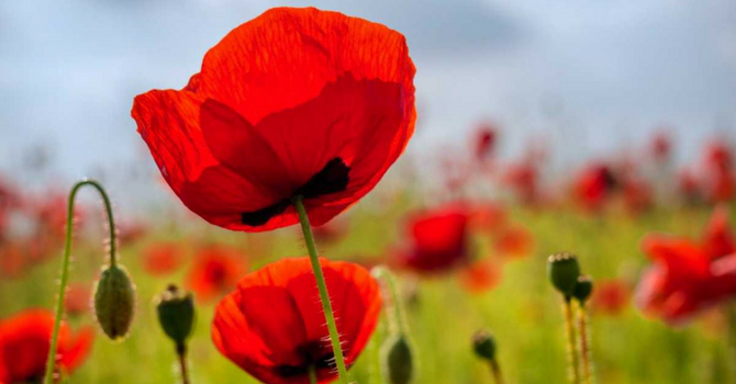 Remembrance Day, 2016 image