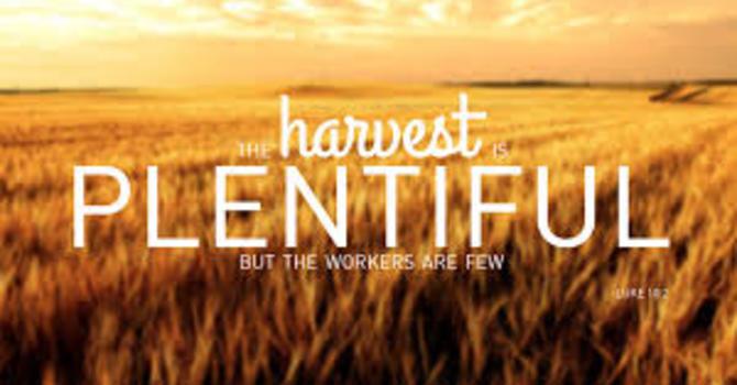 The Harvest image