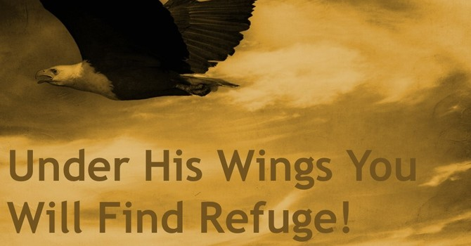 Under His Wings You Will Find Refuge!