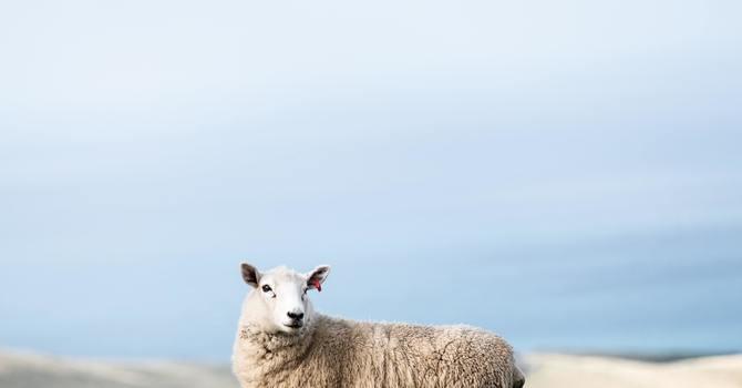 SHEPHERDING GROUPS