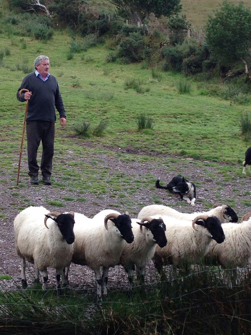 The shepherd of our horizon