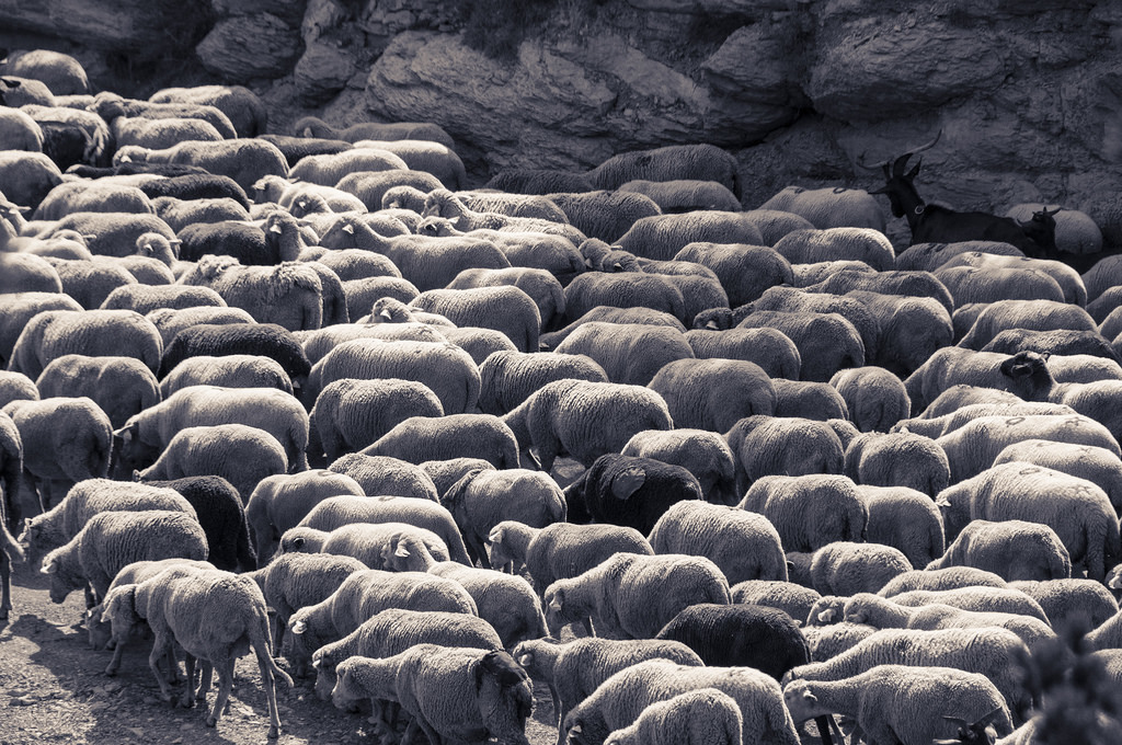 8 Qualities of Shepherd-Leaders | Living Theology | John B