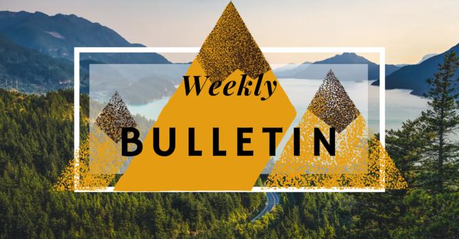 Bulletin | May 17, 2020 image