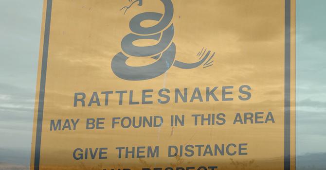 Snakes in the Desert & the Discipline of God