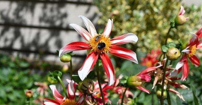 Summer flowers image