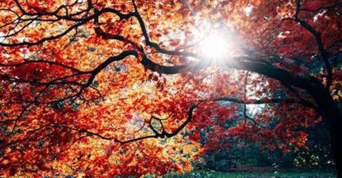 St. Dunstan's Centre Fall Program Catalogue image