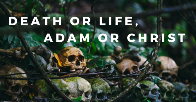 Death or Life, Adam or Christ