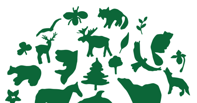 Connect with the Diocesan Environment Network  image