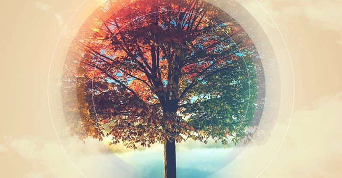 The October Vine image