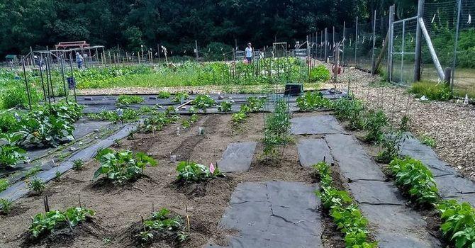 Westford Community Garden