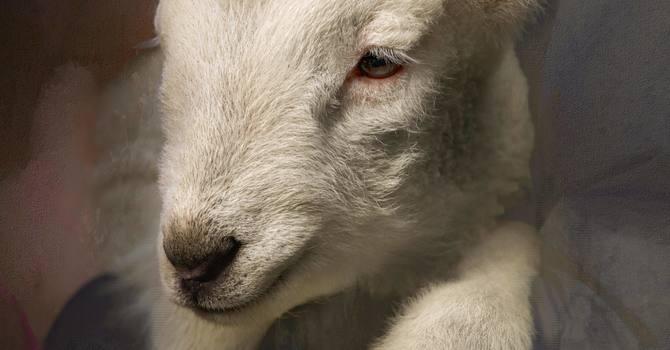 Jesus- the Good Shepherd image