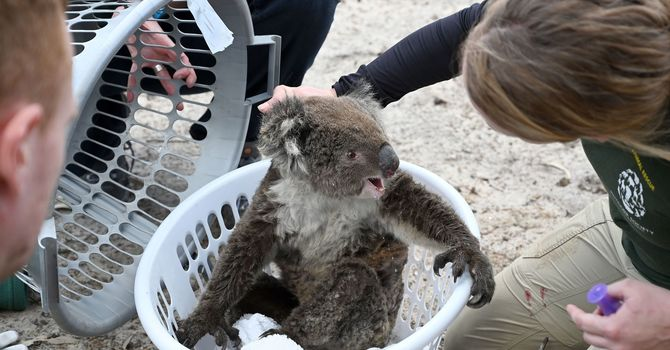 Animals Update image