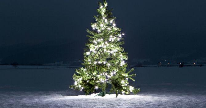 ST CATHERINE'S FESTIVAL OF LIGHTS TREE image
