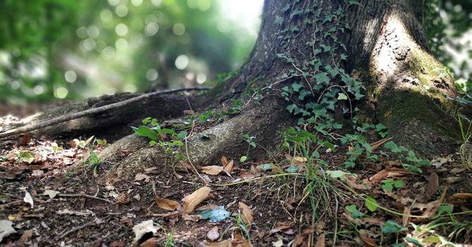 Eco-friendly Alternatives to Single-use Plastics image