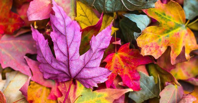 Sorrento Centre Fall Newsletter image
