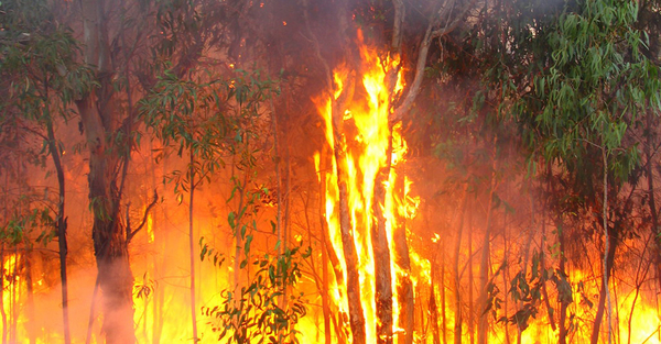 Anglican relief and development agency supports Australian bush-fire appeal