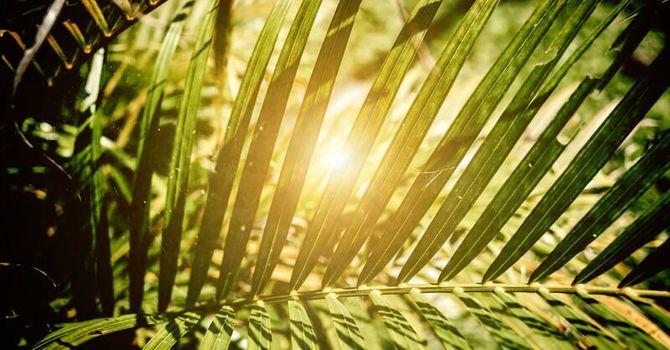 Palm Sunday - April 5, 2020