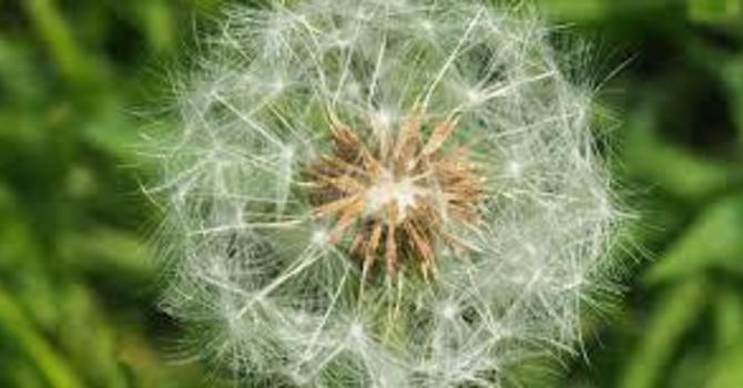 The Gift of the Weeds