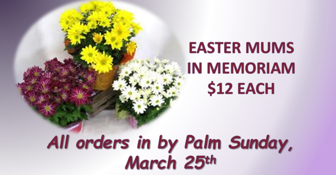 Easter Mums image