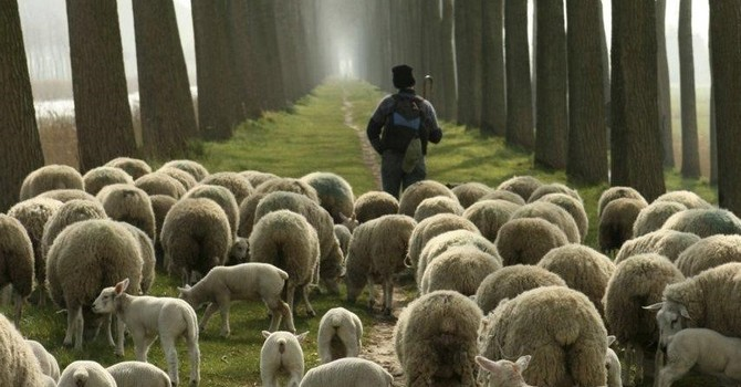 David Remembers the Lessons of a Shepherd