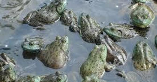 """""""One More Night with the Frogs"""""""