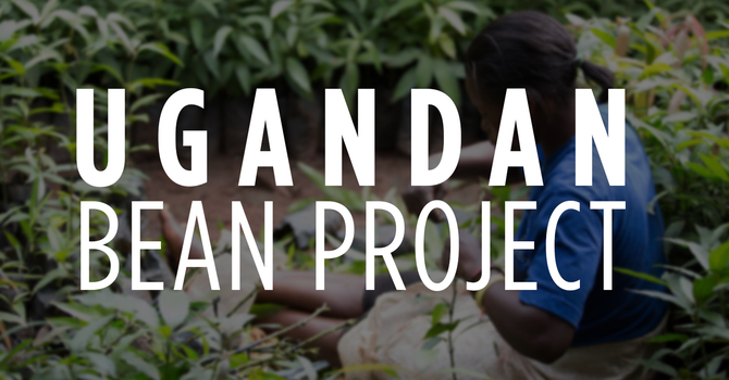 Ugandan Bean Project image