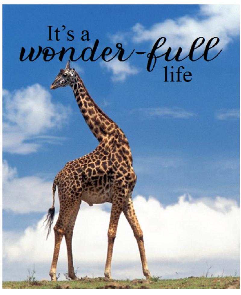 IT'S A WONDER-FULL LIFE