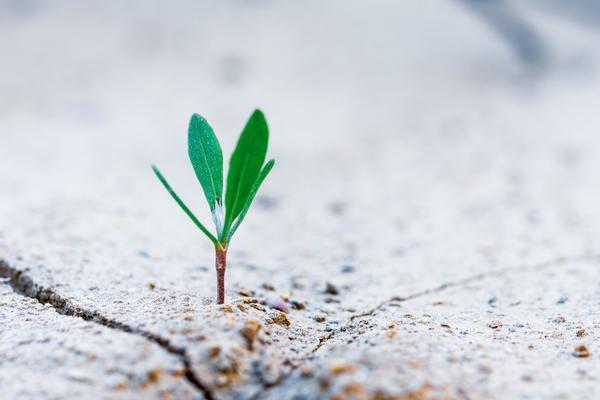 Fundamentals for Spiritual Maturity