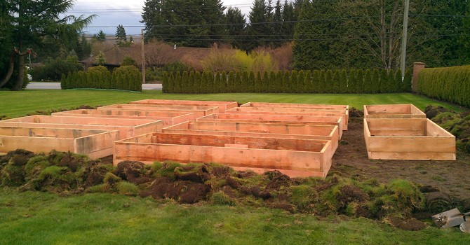 Willoughby Community Garden image