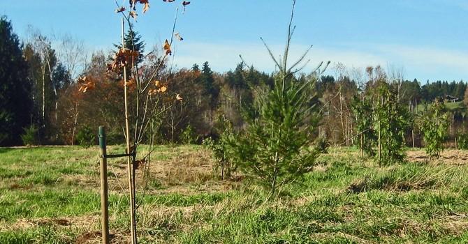 Tree Planting image