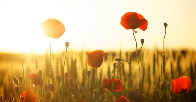 Sue's View: We Remember Them image