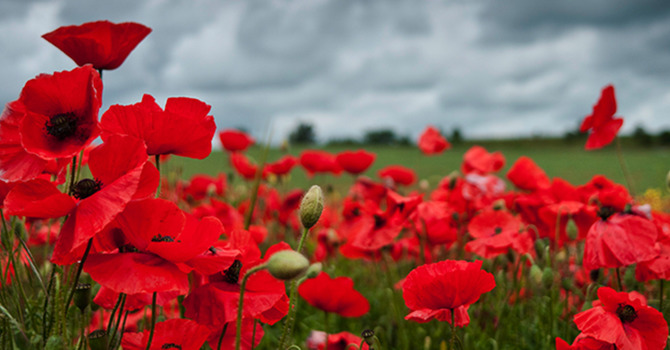Remembrance Day Reflection image