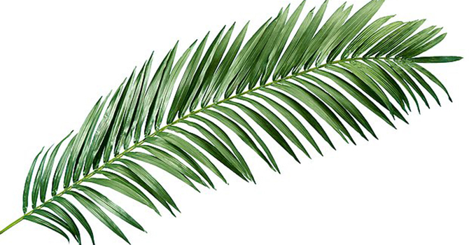 Palms for Easter 2020 image