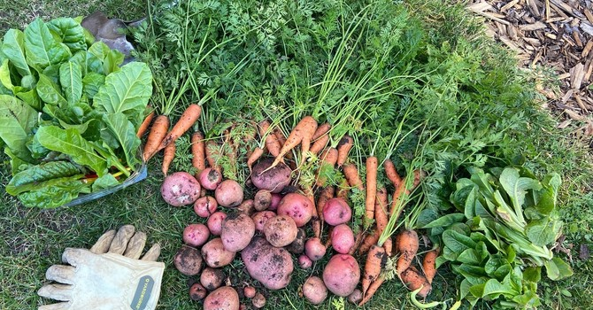 Gardening Bounty image