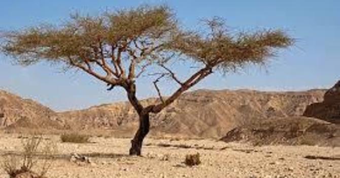 Planting Trees in the Desert