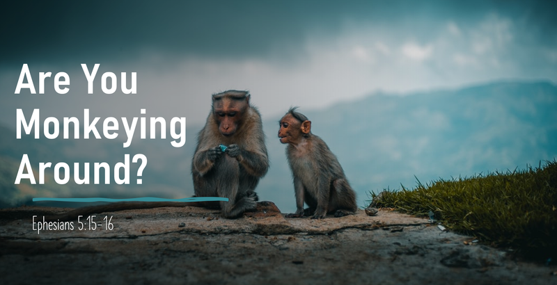 Are You Monkeying Around?