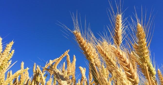 Harvesters image