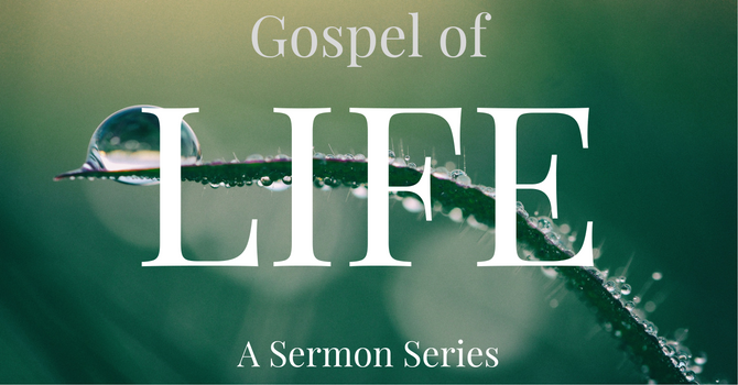 Gospel of Life Sermon Series image